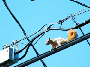 squirrel-on-wire